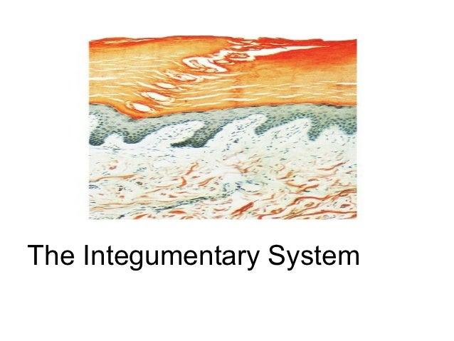 Part 1 the integumentary system(kirin)
