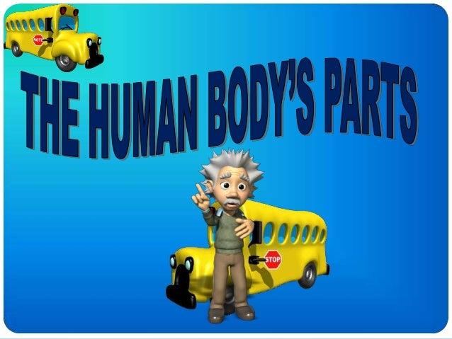 Human bodys parts