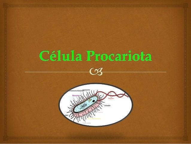 INTRODUCCIÓN    Los procariotas se caracterizan y adquieren una enorme relevancia en la biosfera por sobrevivir en mucho...