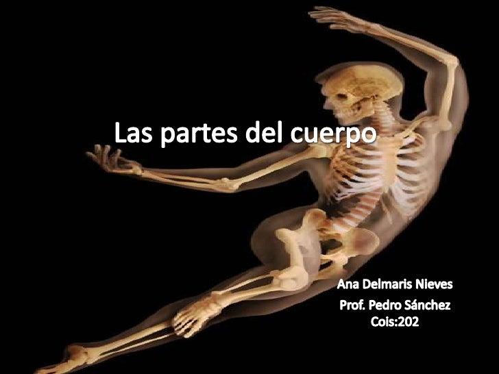 Las partes del cuerpoAna Delmaris NievesProf. Pedro SánchezCois:202<br />