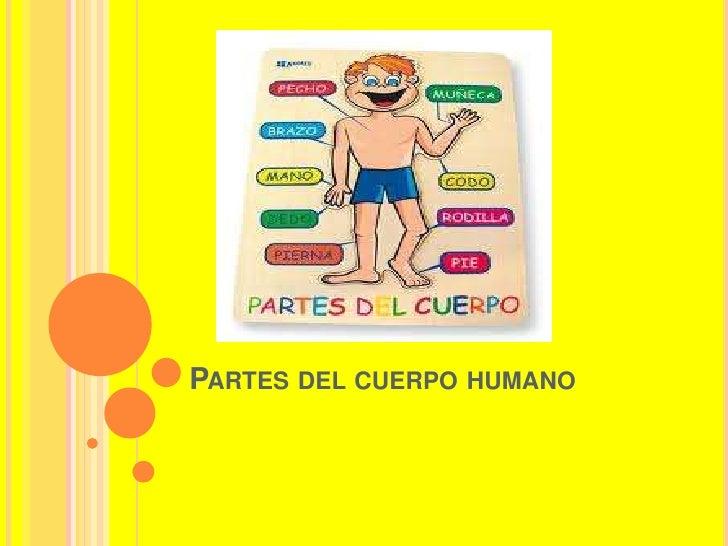 Partes del cuerpo humano<br />