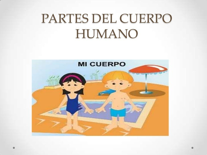 Partes del cuerpo humano upload share powerpoint for Interior del cuerpo humano