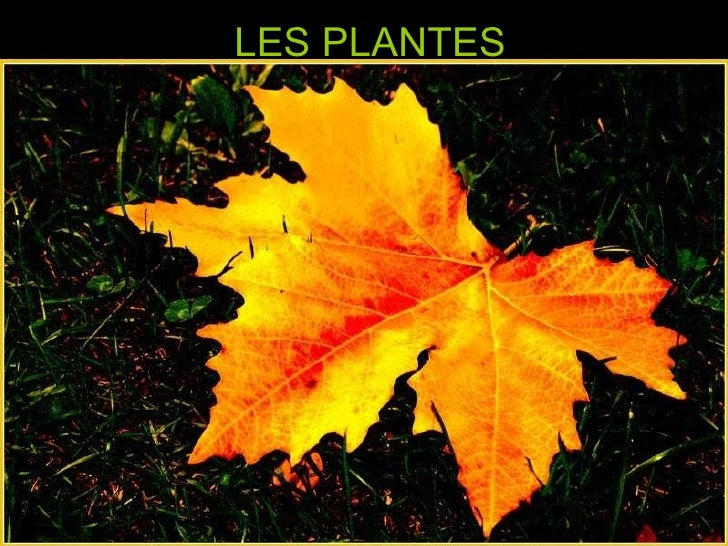 Parts de les plantes