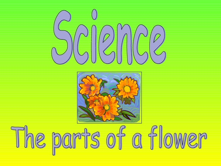 Science The parts of a flower