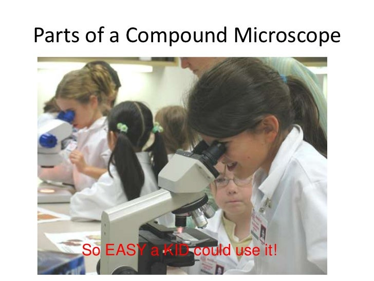 Parts of a Compound Microscope    So EASY a KID could use it!