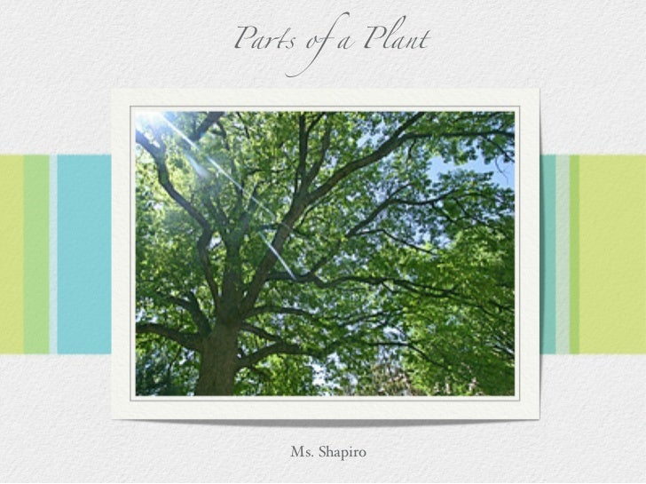 Pa!s of a Plant         Ms. Shapiro