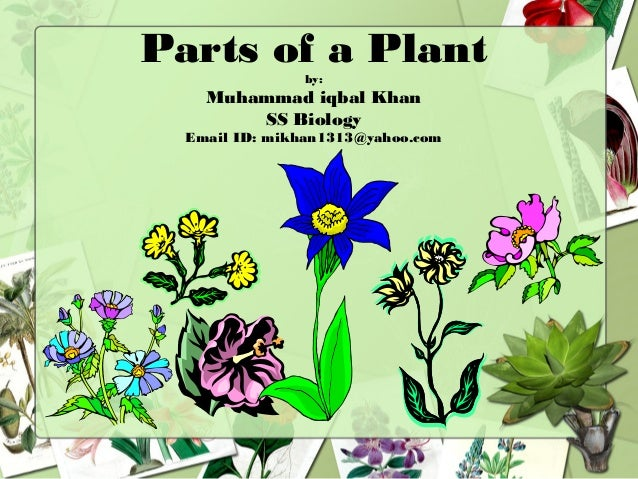 Parts of a Plantby: Muhammad iqbal Khan SS Biology Email ID: mikhan1313@yahoo.com