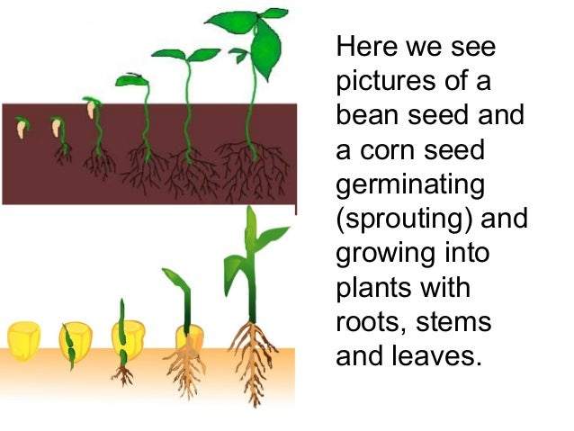 HD wallpapers how seeds grow worksheets kindergarten