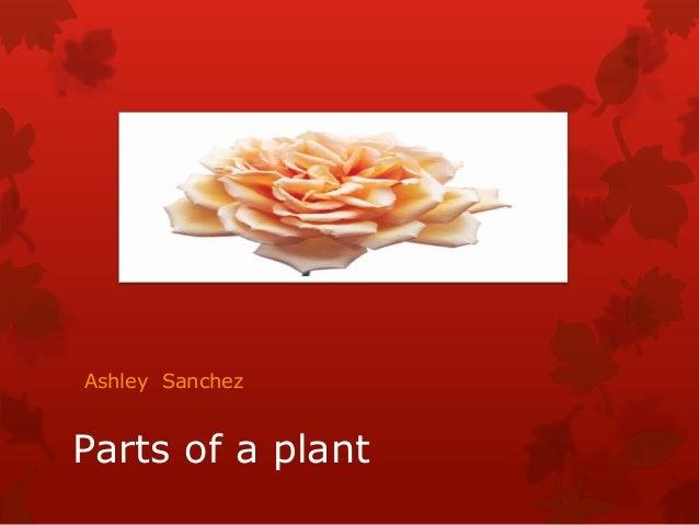 Ashley Sanchez  Parts of a plant