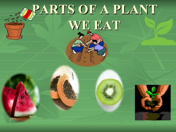 Parts of a plant we eat