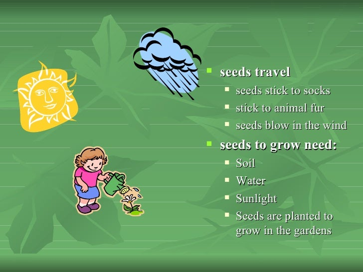 Seeds Travel by Water Seeds Travel  Seeds Stick to