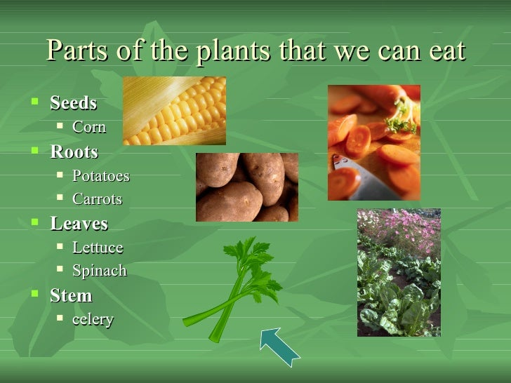 Parts of Plants we Eat Parts of The Plants That we