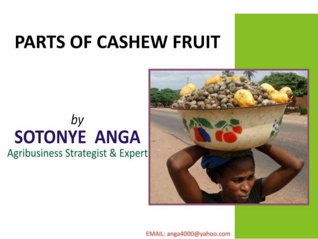 Parts of cashew fruit by anga sotonye p.p