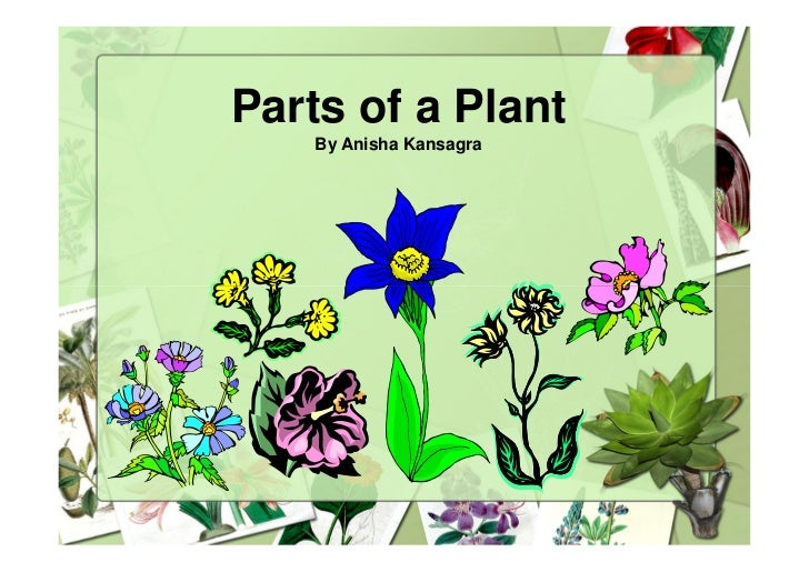 Parts of a Plant    By Anisha Kansagra