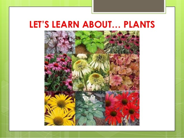 LET'S LEARN ABOUT… PLANTS