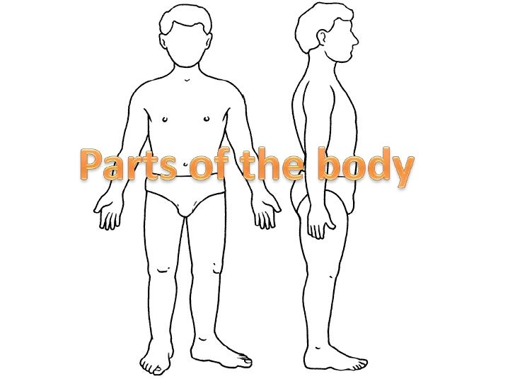 Parts of the body (vocabulary)