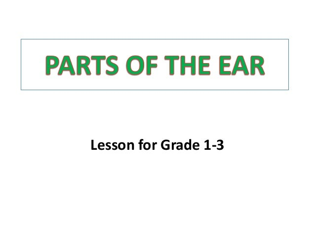 Parts of the ear for demo