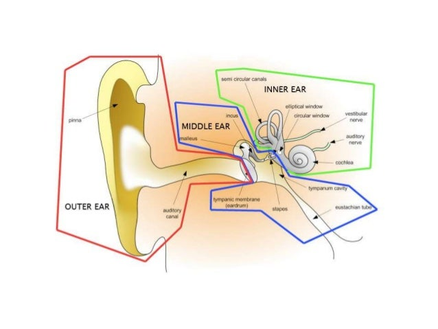 This is the part of the ear