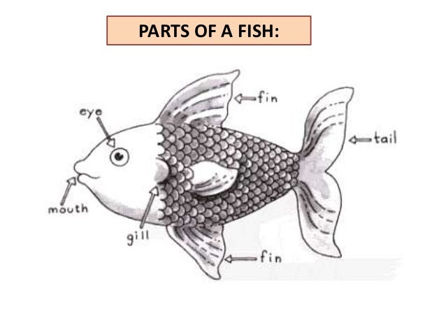 fish parts in english images