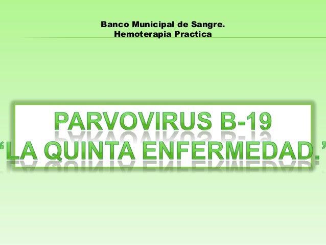 Banco Municipal de Sangre. Hemoterapia Practica