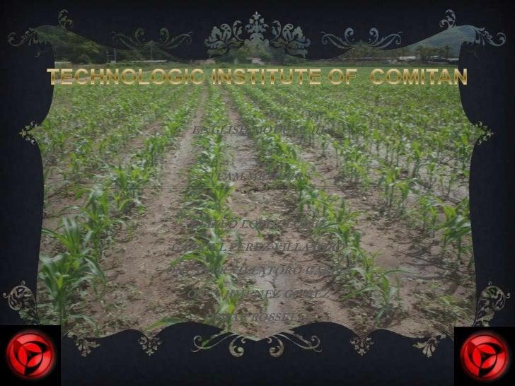 TECHNOLOGIC INSTITUTE OF  COMITAN<br />ENGLISH MODULE III<br />TEAMMEMBERS<br />ELIZEO LOPEZ LOPEZ<br />GABRIEL PEREZ VIL...