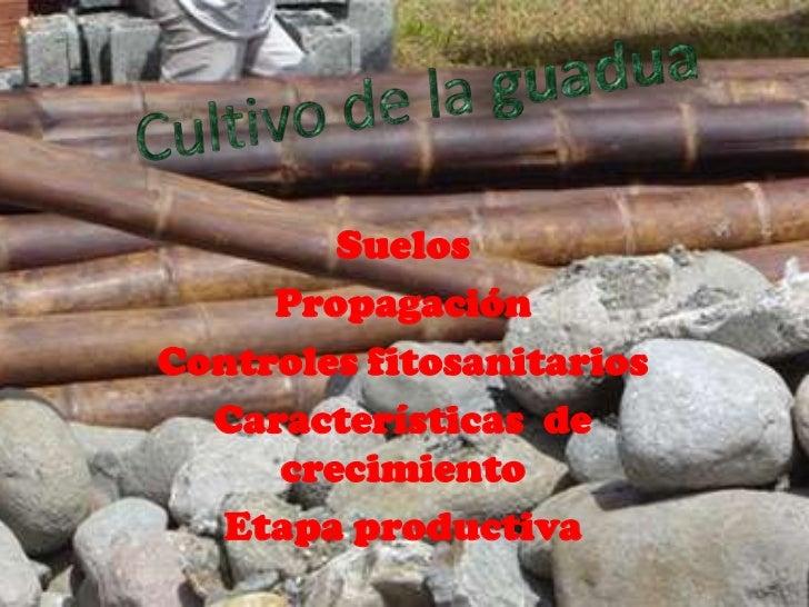 Cultivo de la guadua<br />Suelos <br />Propagación<br />Controles fitosanitarios <br />Características  de crecimiento <br...