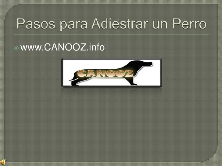 Pasos para Adiestrar un Perro<br />www.CANOOZ.info<br />