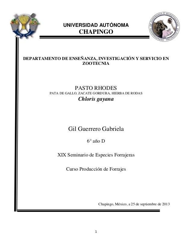 1 UNIVERSIDAD AUTÓNOMA CHAPINGO DEPARTAMENTO DE ENSEÑANZA, INVESTIGACIÓN Y SERVICIO EN ZOOTECNIA PASTO RHODES PATA DE GALL...