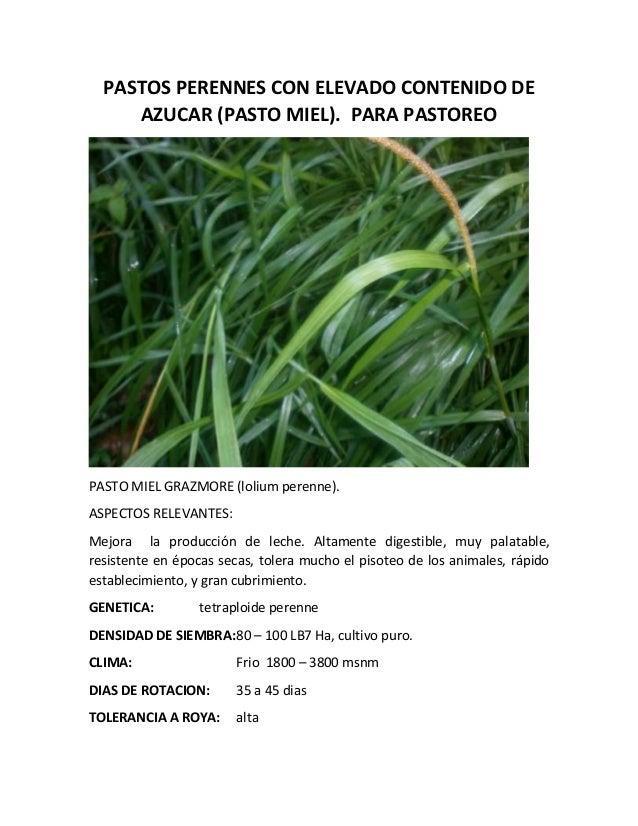 Pastos perennes con elevado contenido de azucar clima frio for Arboles de hoja perenne para clima frio