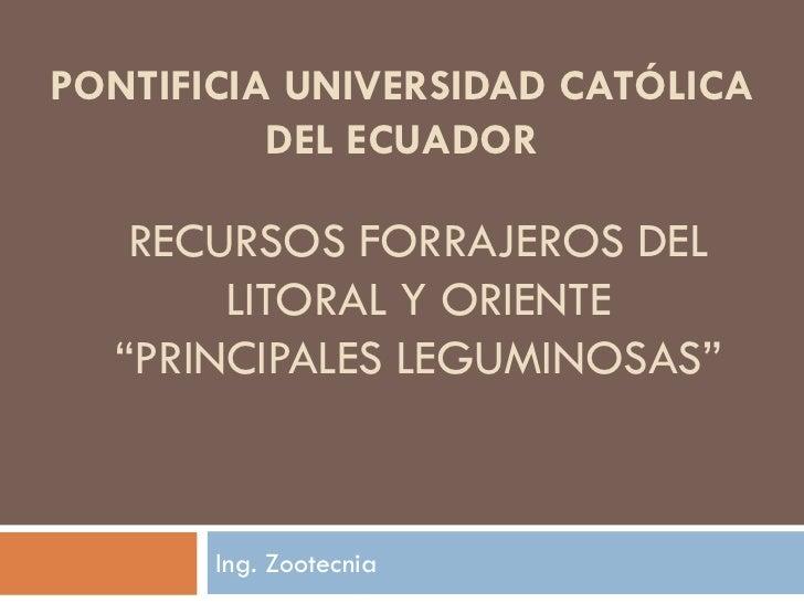 """PONTIFICIA UNIVERSIDAD CATÓLICA          DEL ECUADOR   RECURSOS FORRAJEROS DEL       LITORAL Y ORIENTE  """"PRINCIPALES LEGUM..."""