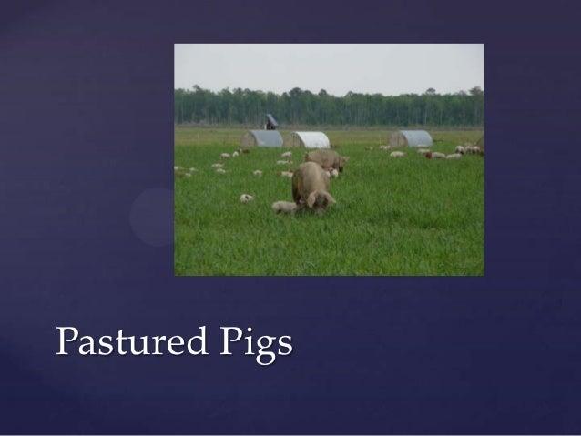 Pastured P