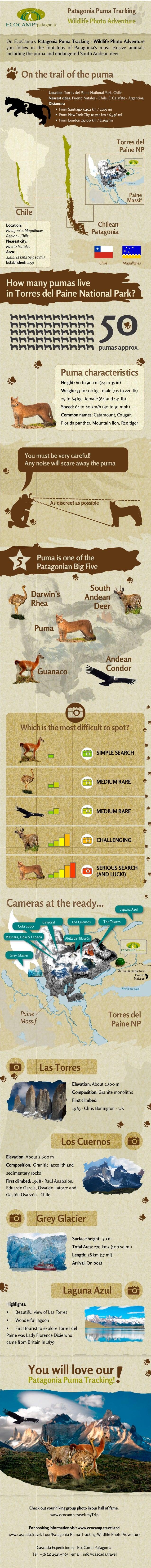 Patagonia Puma Tracking - Wildlife Photo Adventure Infographic