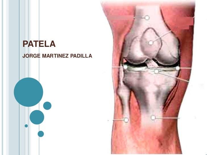 PATELAJORGE MARTINEZ PADILLA