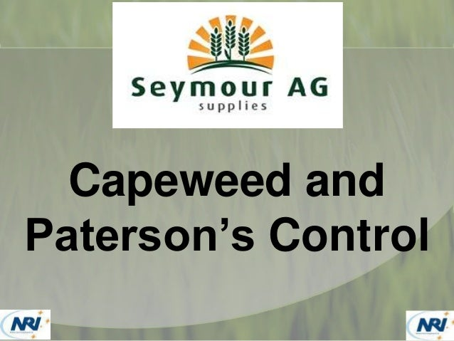 Capeweed and Paterson's Curse Control