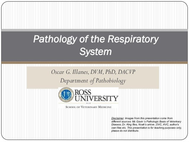 Oscar G.Illanes,DVM,PhD,DACVP Department of Pathobiology Pathology of the Respiratory System Disclaimer: Images from this ...