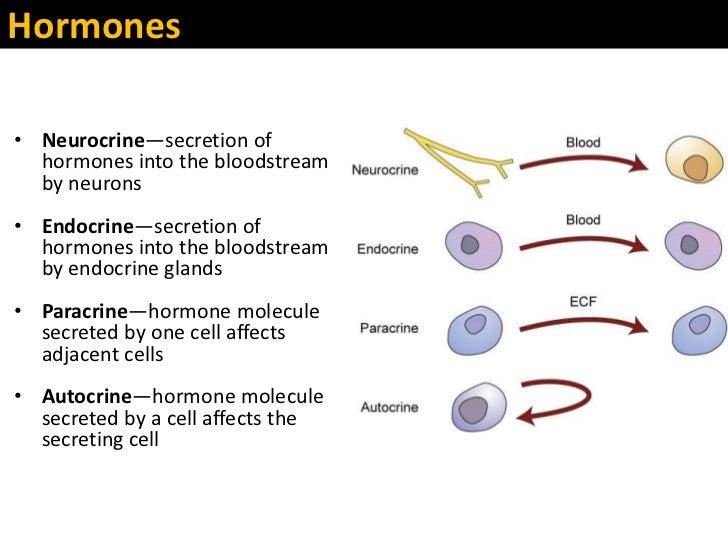 Oxytocin Molecule Patho2 chapter39 stude...