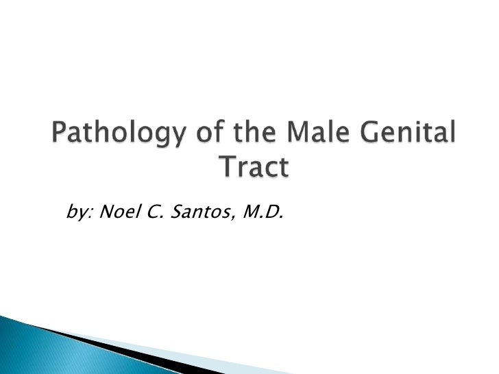 Pathology of the Male Genital Tract<br />by: Noel C. Santos, M.D.<br />