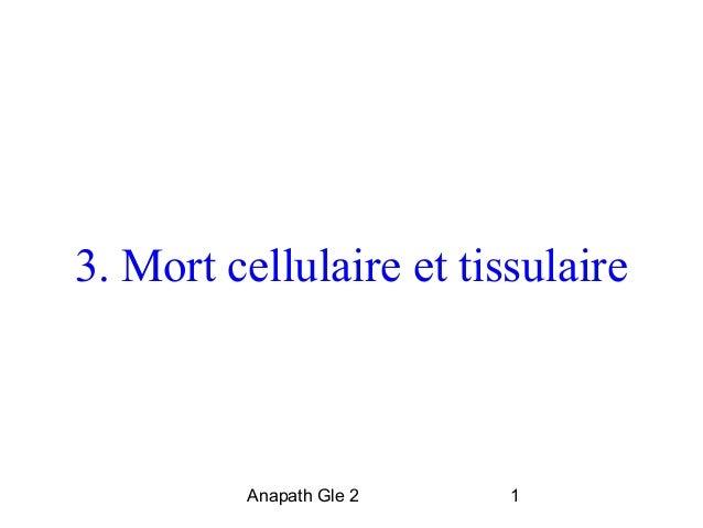 3. Mort cellulaire et tissulaire  Anapath Gle 2 1