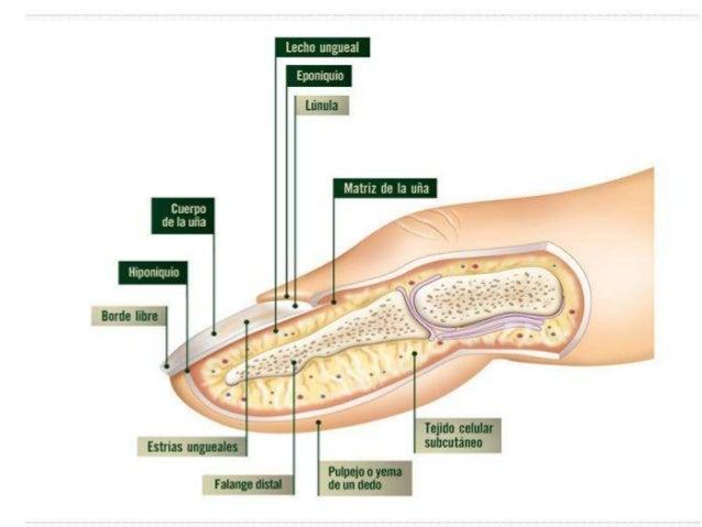 Los síndromes del hongo de los pies