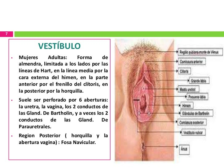 Vaginal lesion 1cm
