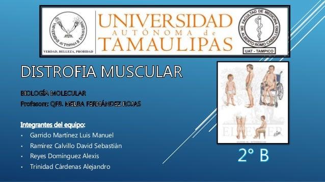 Integrantes del equipo: • Garrido Martínez Luis Manuel • Ramírez Calvillo David Sebastián • Reyes Domínguez Alexis • Trini...