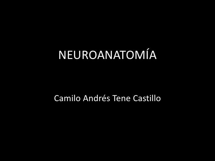 NEUROANATOMÍACamilo Andrés Tene Castillo