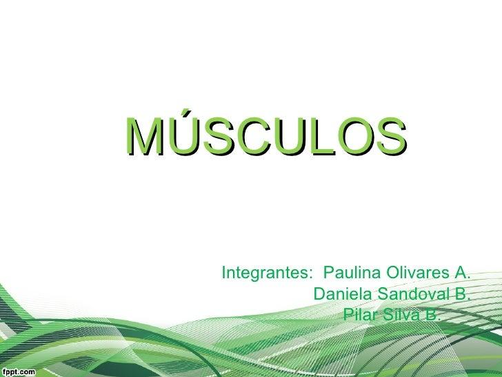 MÚSCULOS  Integrantes: Paulina Olivares A.              Daniela Sandoval B.                 Pilar Silva B.