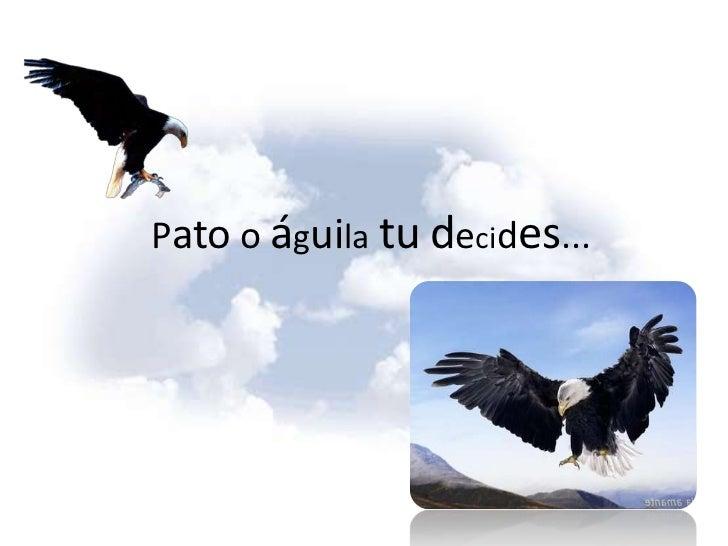 ¿Pato o águila?