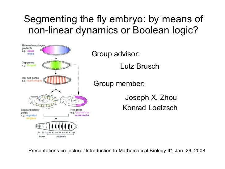 Segmenting the fly embryo: by means of  non-linear dynamics or Boolean logic?                               Group advisor:...