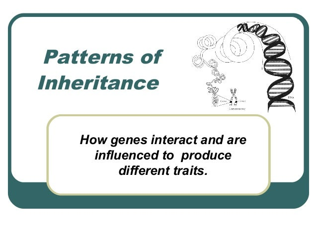 Patterns ofInheritance    How genes interact and are      influenced to produce           different traits.