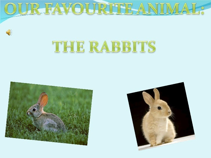 Paula and olga rabbits fantastics!.odt