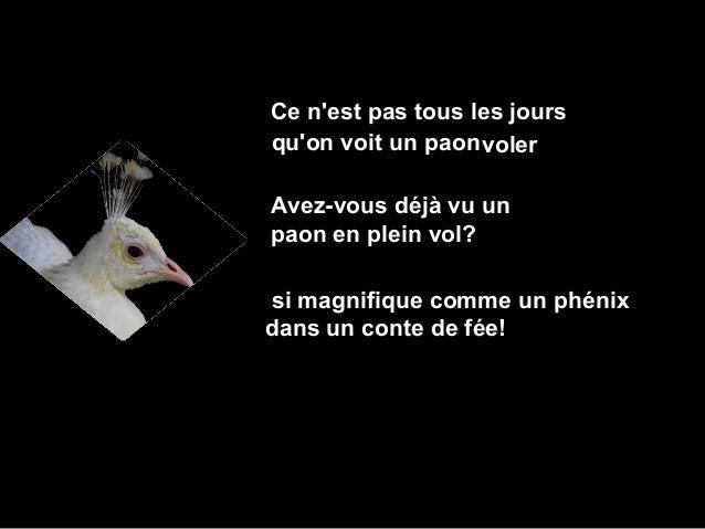 Ce nest pas tous les joursquon voit un paon volerAvez-vous déjà vu unpaon en plein vol?si magnifique comme un phénixdans u...