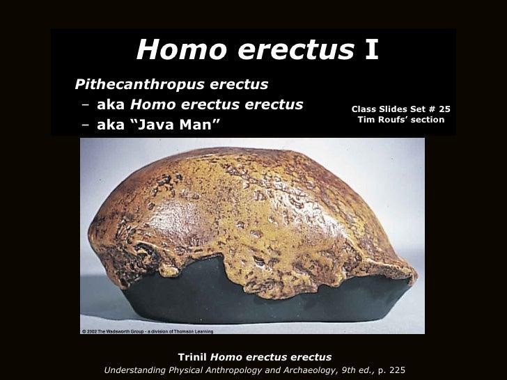 Trinil  Homo erectus erectus Understanding Physical Anthropology and Archaeology, 9th ed.,  p. 225 <ul><li>Homo erectus  I...