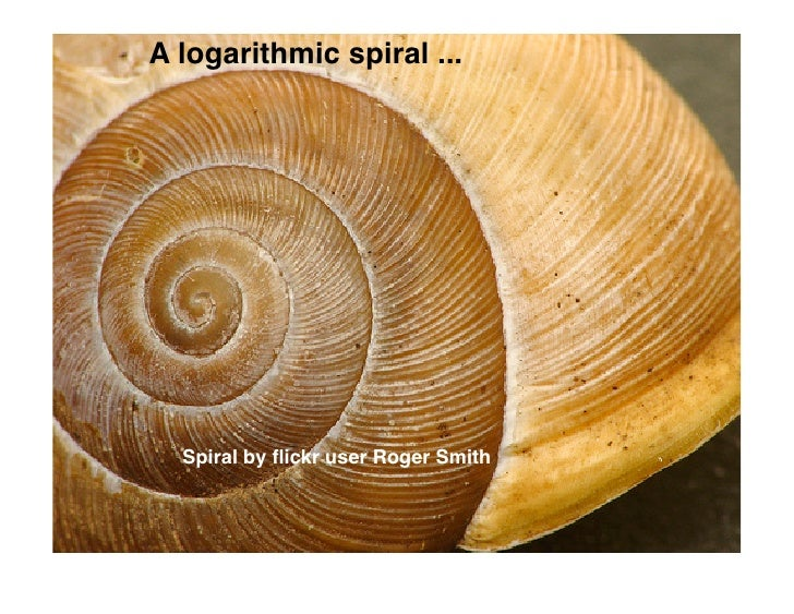 A logarithmic spiral ...       Spiral by flickr user Roger Smith